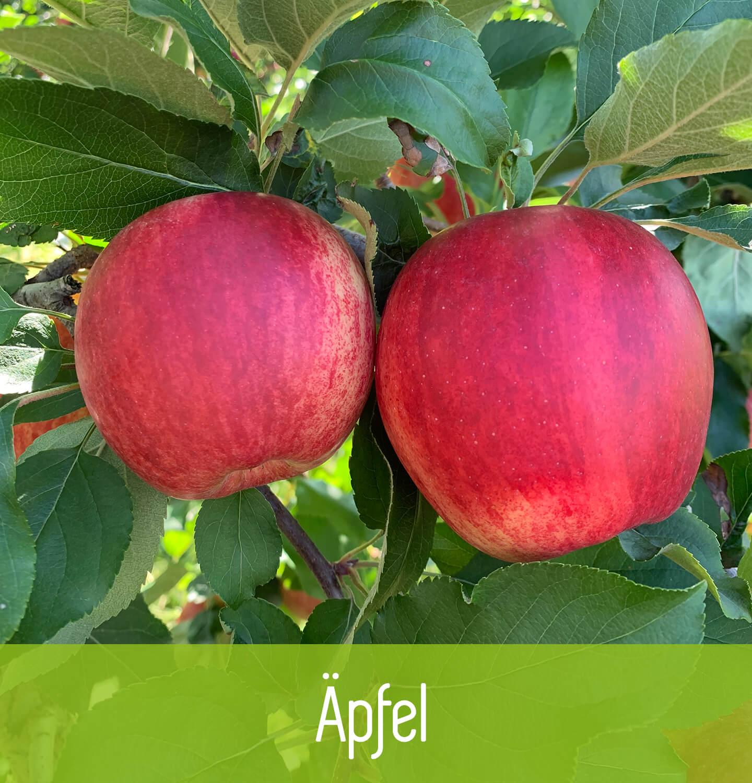 Giner Obstbau Äpfel