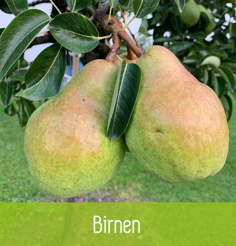 Giner Obstbau Birnen